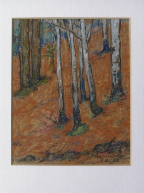 Sous-bois en automne